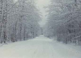 [Image: Photo taken by author along side a road after a recent heavy snowfall. Intended for mood and backdrop only.]